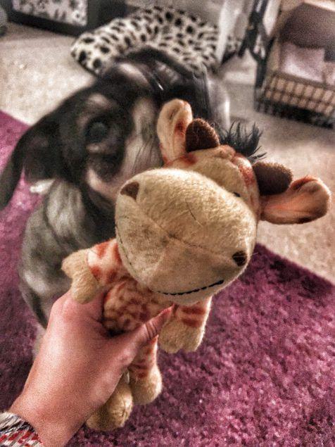 #Hundekolumne: Das Monster erwacht! Aber mit coolen Kong Spielzeug ist das Monster gebändigt worden! #hunde #spielzeug #kong #hundespielzeug #welpen #mischling #hund #hundeliebe