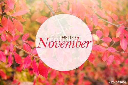 """Download the royalty-free photo """"Hello November banner. Fall background with red autumn leaves in sunshine"""" created by stillforstyle at the lowest price on Fotolia.com. Browse our cheap image bank online to find the perfect stock photo for your marketing projects!"""