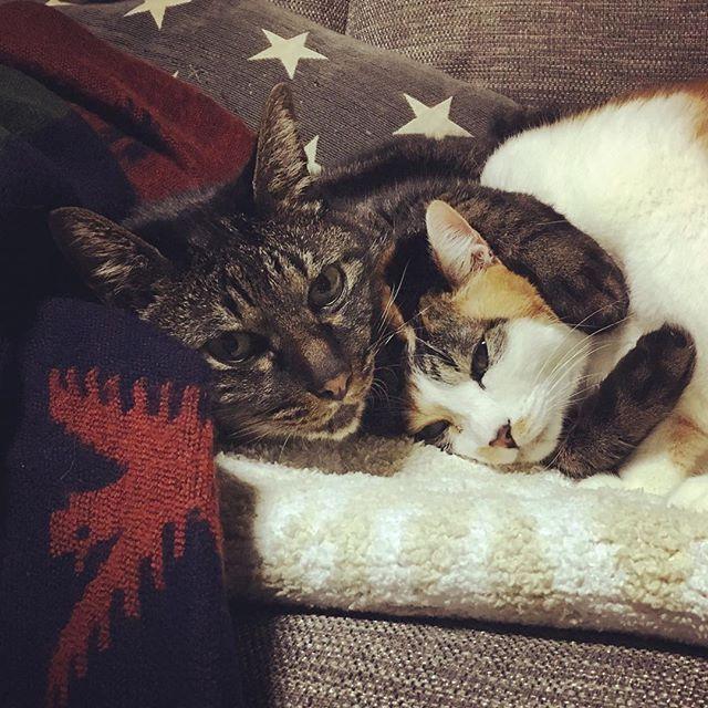 🎶うでまくら♡🎶 ・ 今夜は腕枕でおやすみなさい💤 ・ ・ #cat #catstagram  #catlover  #猫 #キジトラ #三毛猫 #にゃんこ #cats  #ねこ部  #picneko #lovely #愛猫 #ぎゅー  #ピートとリンダ #ラブラブ #腕枕 #猫のいる暮らし  #猫と暮らす #japan  #shizuoka #breakfast #goodnight  #おやすみなさい
