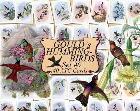 digital collage sheet 40 ATC cards Printable Instant Download Image Digital Cards Tags vintage image John book GOULD/'s HUMMINGBIRDS Set #6