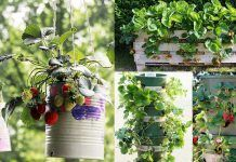 9 Unbeatable DIY Ideas for Growing Strawberries istrawberriedn a Little to No Space