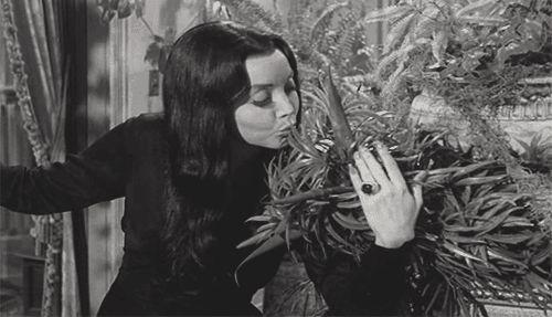 Mortica & Cleopatra