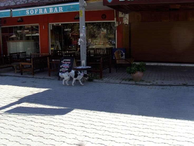 One of the many tame but unowned dogs around Dalyan. (They seem to be able to read, though.)