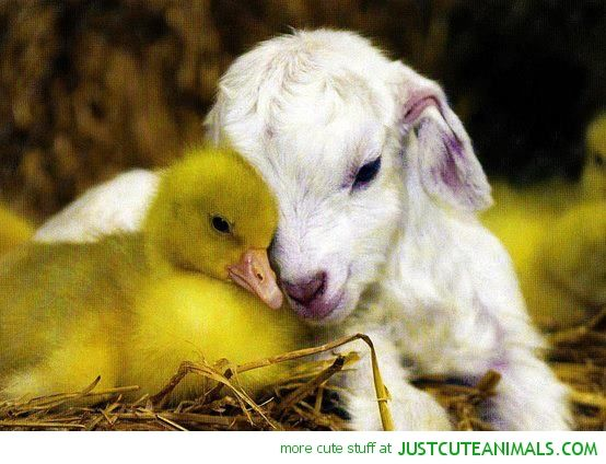 Real farm animals together - photo#46