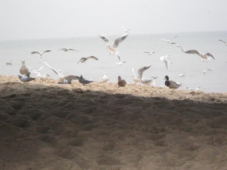 Beach, Gdansk