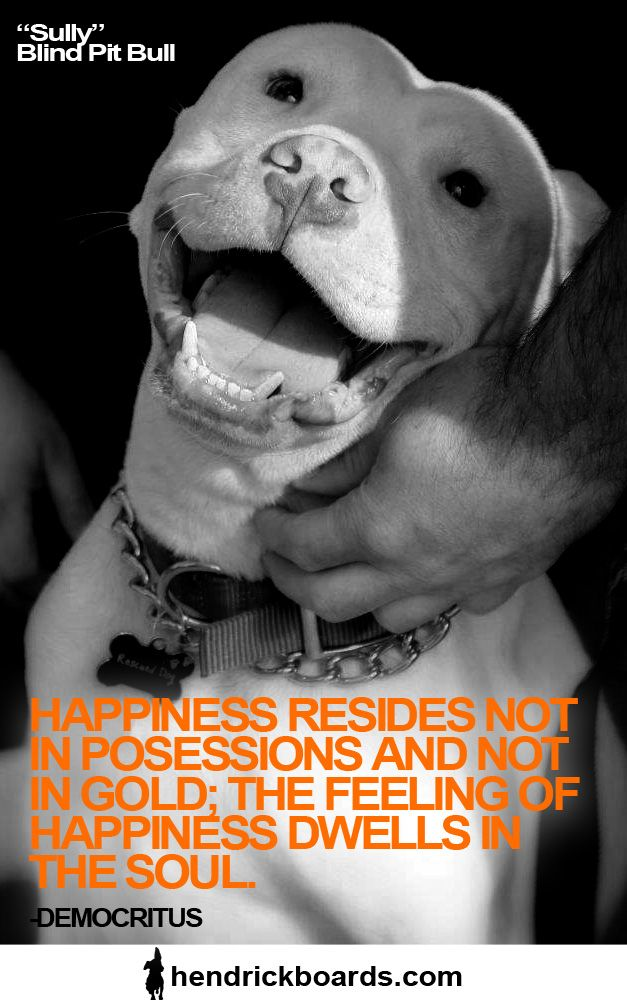 Pitbull Dog Quotes 162 Best Pitbull Quotes Images On Pinterest  Animal Rescue Pit