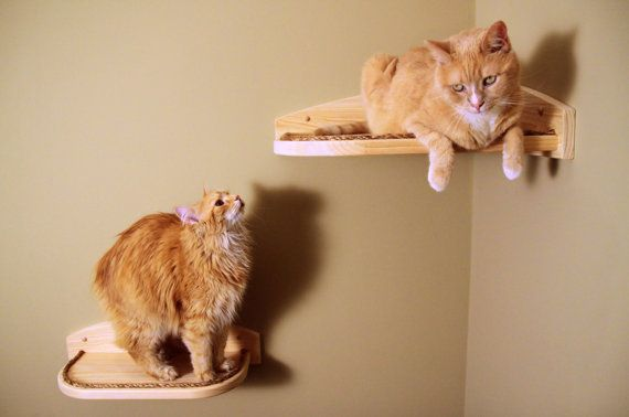 SAVE 30  Mountain Cat Climbers  Corner Climber by MountainCatTrees, $77.00