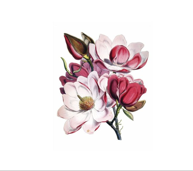 Beautiful large magnolia floral temporary tattoo to wear at parties, festivals, events, weddings and proms. Makes a great gift for birthdays, holidays and just because.  Magnolias stand for purity, nobility, perseverance, dignity and a love for nature.  LISTING INCLUDES • 1 large temporary tattoo • Size approx 5 x 6inches (13 x 15cm) • Includes easy application and care instructions • Lasts 2-5 days (up to 7 days with an application of Liquiskin®) • Packaged in a clear sleeve and