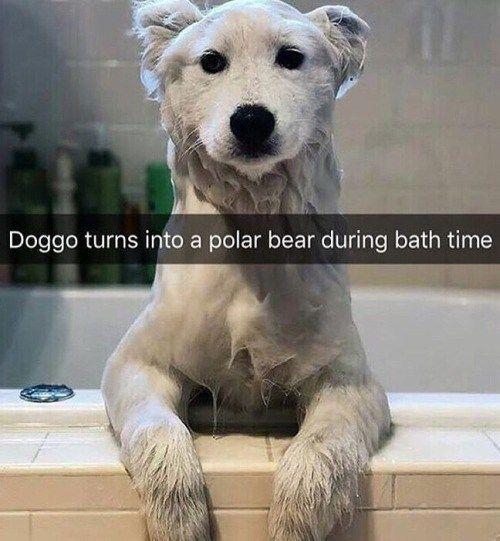 Nur 20 frische Tier-Meme, die viel zu lustig sind,…