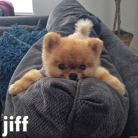 jiff the dog
