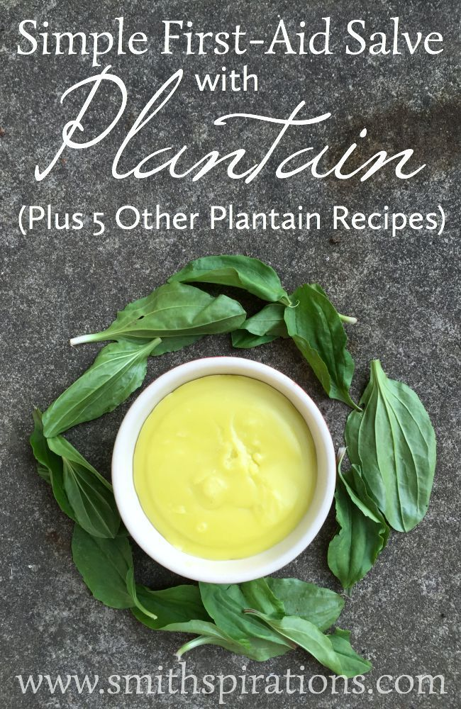 Simple First-Aid Salve with Plantain (Plus 5 Other Plantain Recipes) This is a great item to have in your natural medicine cabinet and is so simple to make!: