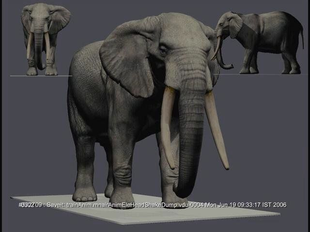 Elephant walk cycle and animation Test on Vimeo