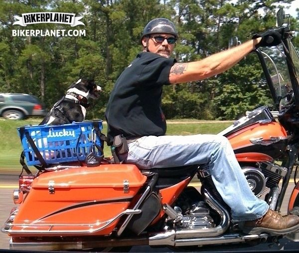 1000 Images About Cool Rides On Pinterest: 1000+ Images About Cool & Funny Biker Images On Pinterest