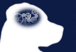 Treating Epilepsy Naturally In Dogs