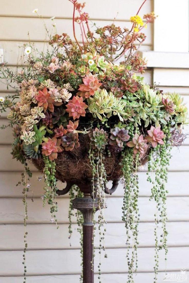 103 best Driftwood, Epiphytes & Succulents images on Pinterest ...