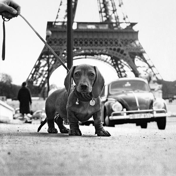Love the pup in paris