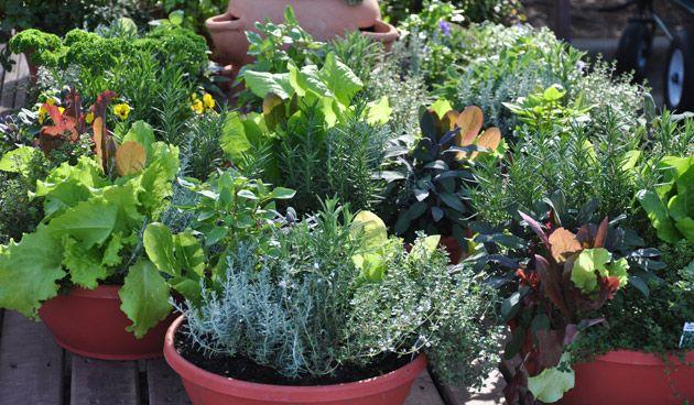 Planten in potten hebben goede verzorging nodig. Maar hoe en wanneer geef…