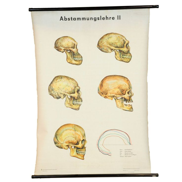 30 best medical wall charts images on Pinterest Charts, Antique - medical charts