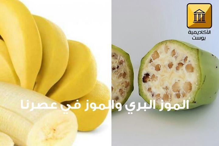 يعتقد العلماء أن زراعة الموز بدأت منذ حوالي 7000 عام أو حتى 10000 عام في منطقة بابوا غينيا الجديدة كما زرع أيضا في مناطق من الجنوب الشرقي لآ Avocado Fruit Food
