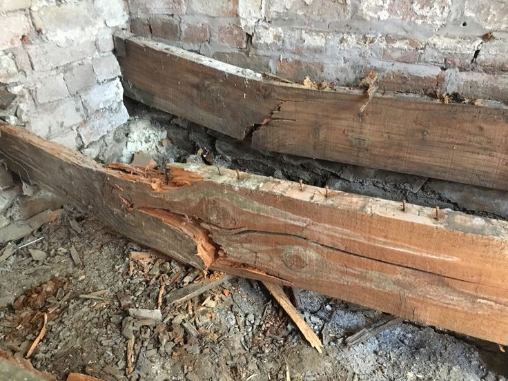 Dry rot , wet rot and rising damp