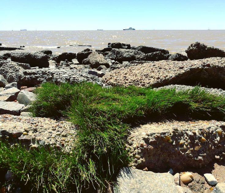 Necesitaba agua grande. #summertime #river #rio #shore #beach #playa #reservaecologica #urbanstories #urbanlife #urbanexplorer #holidays #instaphoto #instapic #skyline #horizon #horizonte #wanderer...