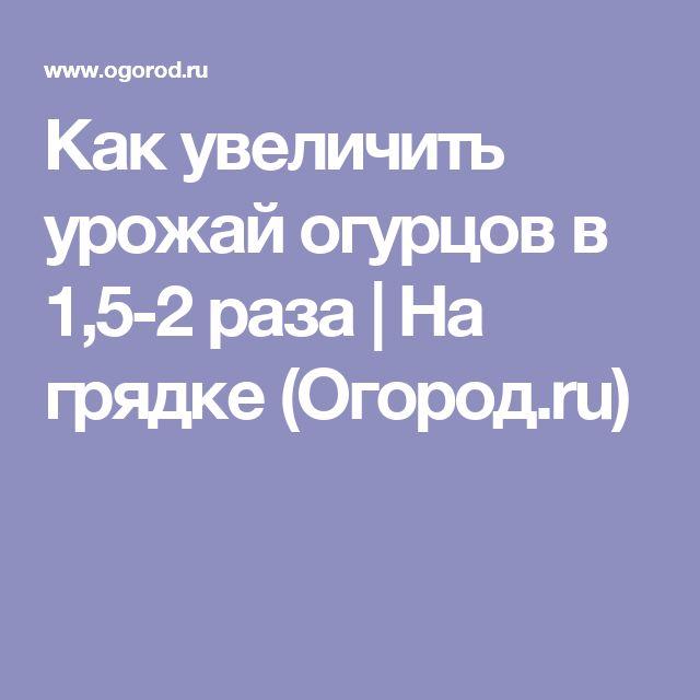 Как увеличить урожай огурцов в 1,5-2 раза | На грядке (Огород.ru)