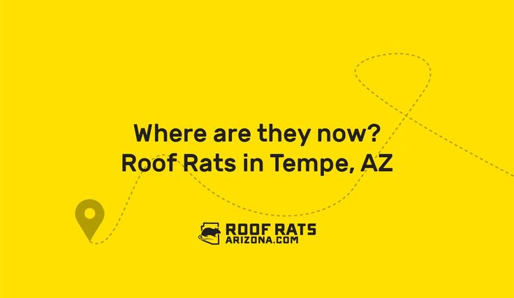 Where are they now? Roof Rats in Tempe, AZ