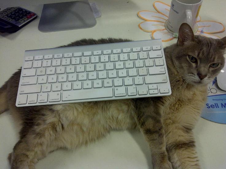 Good typing posture.
