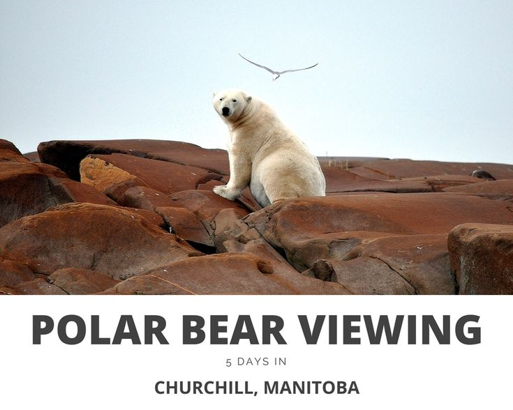 5 DAYS IN CHURCHILL, MANITOBA - Visiting the polar bear capital of the world