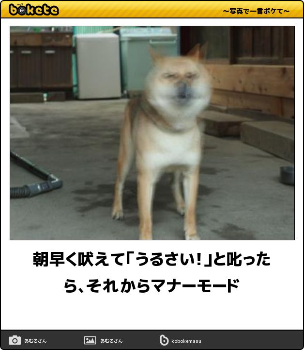 ペットスマイルが運営する、犬に関する情報満載のメディアサイトPetSmile news(ペットスマイルニュース)forワンちゃん。「【閲覧注意】即、笑える「犬まとめbokete」 笑いたい人は必見!」についての記事をご紹介します。