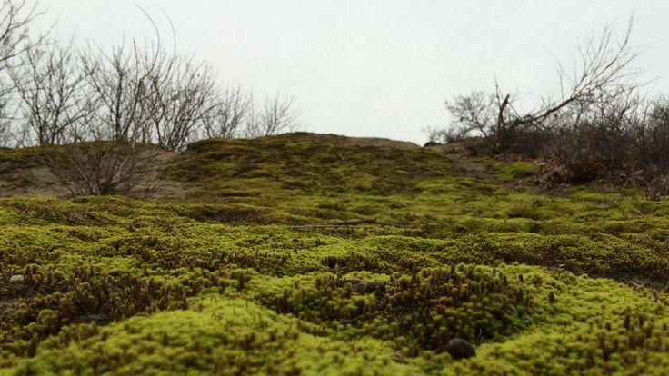 Landschappen @Noordwijk