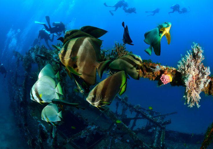 Puerto Galera i Filippinerne har rigtig god dykning - bl.a. fra Coco Beach. Du kan både dykke ved koralrev og skibsvrag.