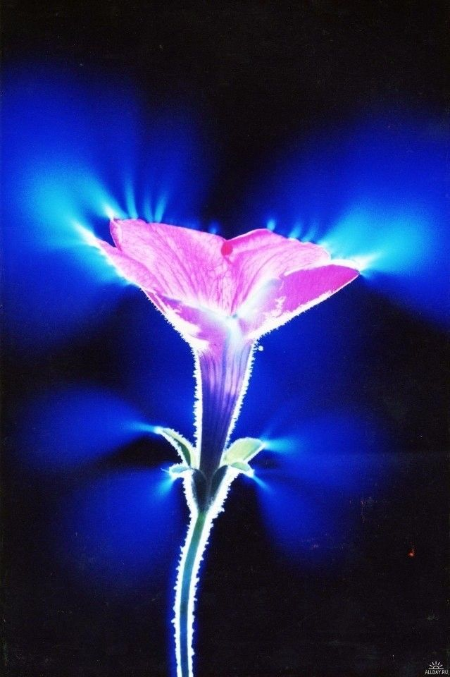Человек светится - эксперимент в Японии - Страница 2 E5dbcd6959b553ab53c91920badb4a68