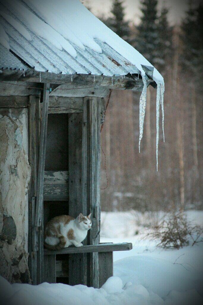 Deze afbeelding is gekozen om te laten zien hoe koud het in de wereld is.  (I have no idea what this caption says but, I love the photo.)