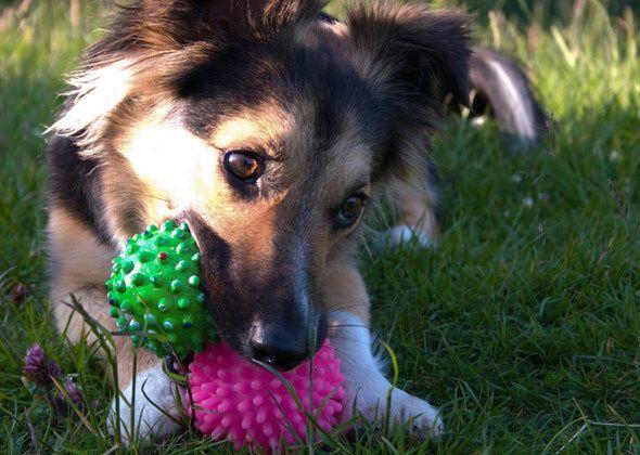 Coolest Dog Toys In 2020 Best Dog Toys Dog Behavior Dog Toys