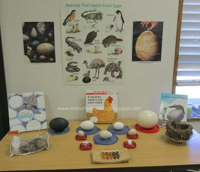 """Provocation """"Eggs, Eggs Everywhere"""" Exploration (from For the Children)"""