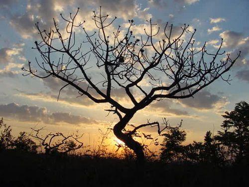 As plantas da caatinga são xerófilas, ou seja, adaptadas ao clima seco e à pouca quantidade de água. Algumas armazenam água, outras possuem raízes superficiais para captar o máximo de água da chuva. E há as que contam com recursos pra diminuir a transpiração, como espinhos e poucas folhas.  http://www.brasilescola.com/brasil/caatinga.htm
