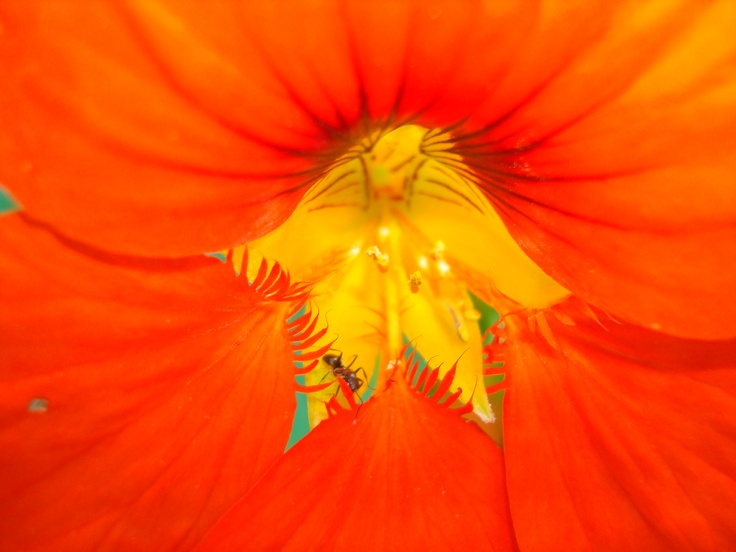 I love this photo of a hibiscus flower, it looks like a painting http://www.visionandwords
