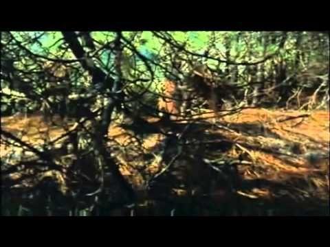 """""""Une Robe d'Été"""" de François Ozon sorti en 1996.  Ce film contient en fond sonore la chanson de Sheila Bang-Bang."""