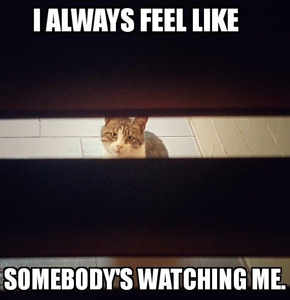 I always feel like somebody's watching me.