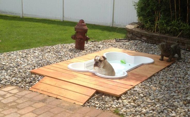 """BUT Rosco has a DOG BONE POOL!"": Idea, Animals, Dogs, Outdoor, Pets, Backyard, Dog Pools, Doggie Pool"