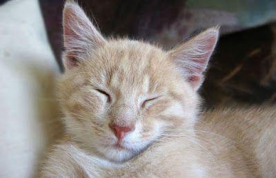 Boklysten: Kulturkollos veckoutmaning vecka 50: Är katten det...