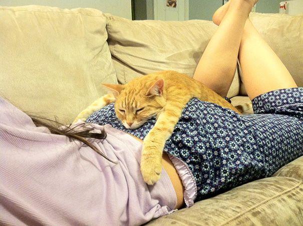 Enlace permanente a Cat Salones Cómo de mi compañero de cuarto