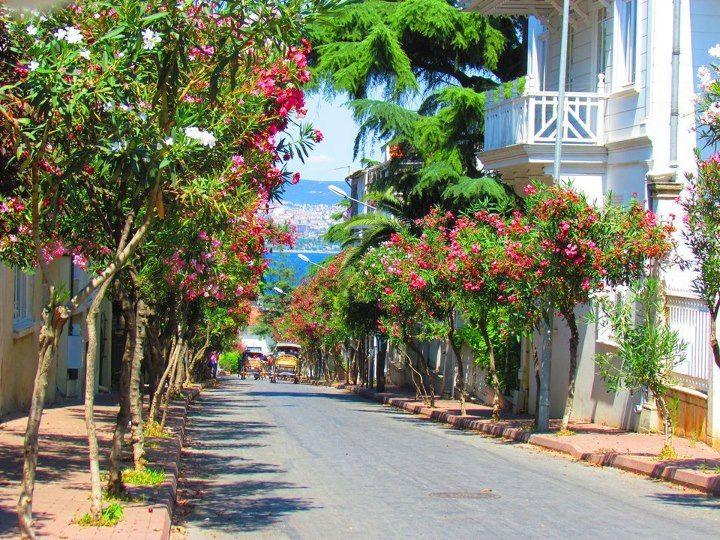 #tatil http://www.tatilhome.com.tr/buyukada.html  Prens adalarının en büyüğü Büyük adaya kaçmaya ne dersiniz?