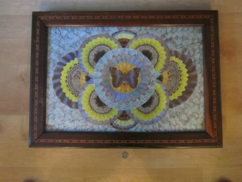 Antique Collectible Real Butterfly Wing Large Picture Table Brazilian ?