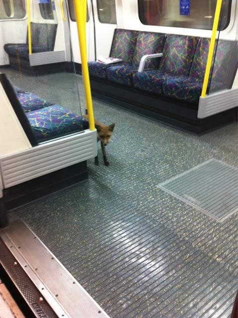 Animals on the tube