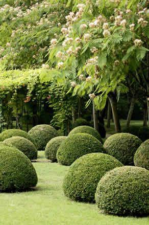 Con un mantenimiento adecuado podemos dar forma a los arbustos del jardín y conseguir un efecto espectacular. Visita nuestra web: www.lleidatanamediambient.com