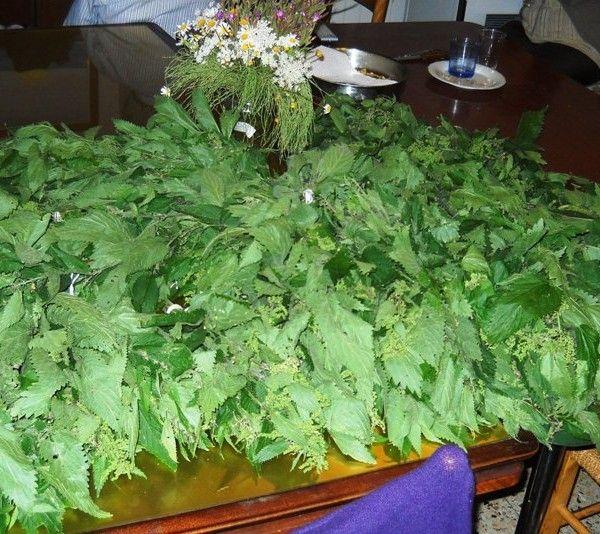 Oh, il verde damasco dell'ortica! essiccata… (farina d'ortica)
