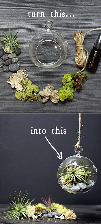Raise your very own Tillandsia or, air plant, with this Hanging Air Terrarium Kit. It includes everything you need to create the perfect environment for caring for your little one––just spray with the included water atomizer once a week and place in a bright, sunny spot. The finished terrarium is small and compact, great for hanging in the kitchen, on a bedside table or by your work desk.