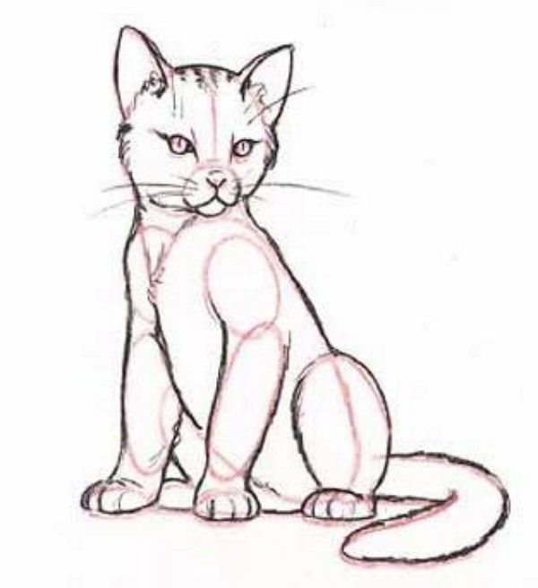 how to draw sitting cat step by step-6